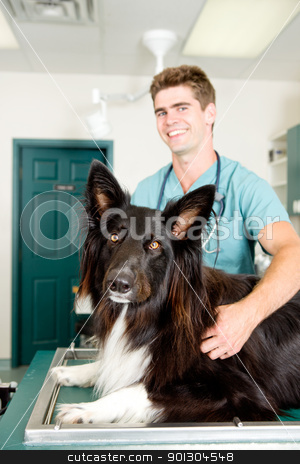 Large Dog at Small Animcal Clinic stock photo, A large dog at a small animal clinic in the surgery prep. room.  Shallow depth of field, focus on dog by Tyler Olson