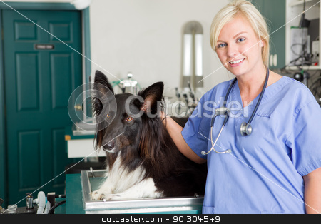 Dog at the Vet stock photo, A portrait of a dog at the vet in the surgery preparation room by Tyler Olson