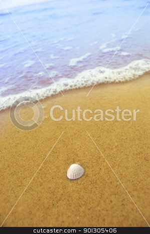 Sea shell on sandy beach stock photo, Sea shell on the sandy beach. Vacation concept by johnnychaos