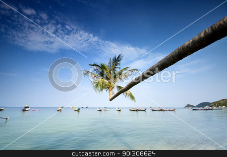 palm and boats on tropical beach stock photo, palm and longtail boats on tropical beach. Ko Tao island, Thailand by johnnychaos