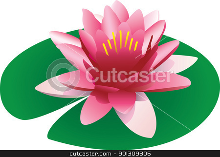 Floating pink lotus illustration stock vector clipart, Illustration of a floating pink lotus vector illustration isolated on white by Patrick Guenette