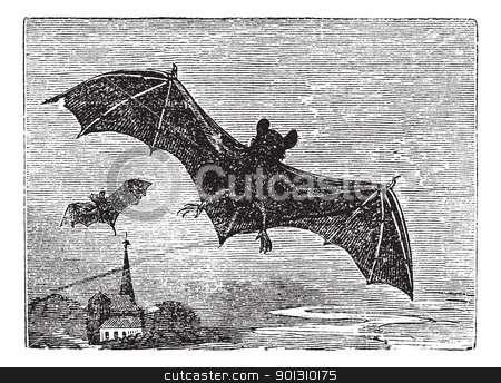 Common Bat vintage engraving stock vector clipart, Common Bat or Vesper Bat or Evening Bat or Vespertilionidae, vintage engraving. Old engraved illustration of a Vesper Bat in flight. by Patrick Guenette