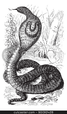 Indian Cobra or Spectacled Cobra or Naja naja vintage engraving stock vector clipart, Indian Cobra or Spectacled Cobra or Naja naja, vintage engraving. Old engraved illustration of an Indian Cobra. by Patrick Guenette
