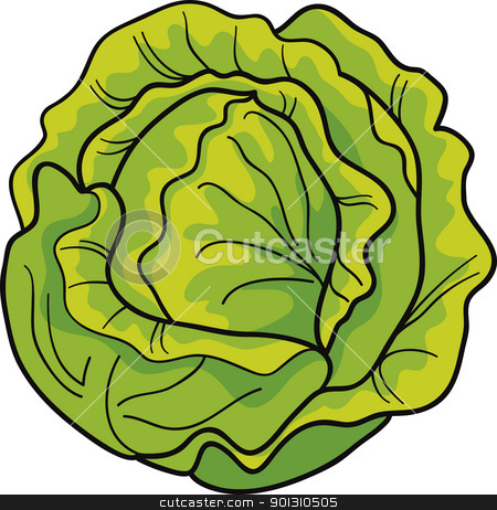 cabbage stock vector