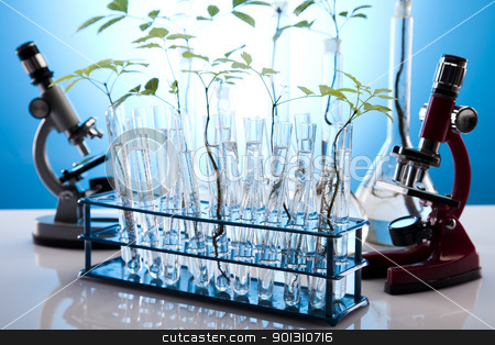 Close-up of plants in test tubes laboratory  stock photo, A laboratory is a place where scientific research and experiments are conducted. Laboratories designed for processing specimens, such as environmental research or medical laboratories will have specialised machinery (automated analysers) designed to process many samples.  by Sebastian Duda
