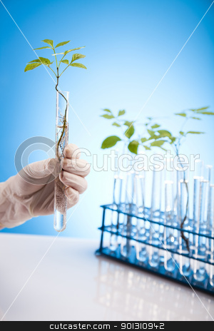 Plants in test tubes in  laboratory  stock photo, A laboratory is a place where scientific research and experiments are conducted. Laboratories designed for processing specimens, such as environmental research or medical laboratories will have specialised machinery (automated analysers) designed to process many samples.  by Sebastian Duda
