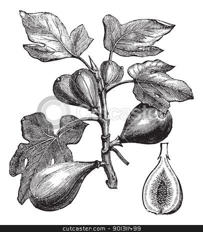 Melanie fikus bilder news infos aus dem web for Ficus benjamin perde foglie