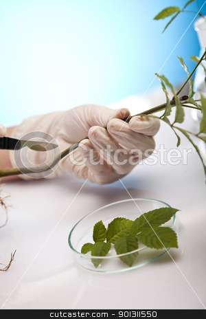 Plant laboratory stock photo, A laboratory is a place where scientific research and experiments are conducted. Laboratories designed for processing specimens, such as environmental research or medical laboratories will have specialised machinery (automated analysers) designed to process many samples.  by Sebastian Duda