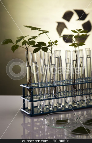Plant growing in test tubes in a  laboratory  stock photo, A laboratory is a place where scientific research and experiments are conducted. Laboratories designed for processing specimens, such as environmental research or medical laboratories will have specialised machinery (automated analysers) designed to process many samples.  by Sebastian Duda