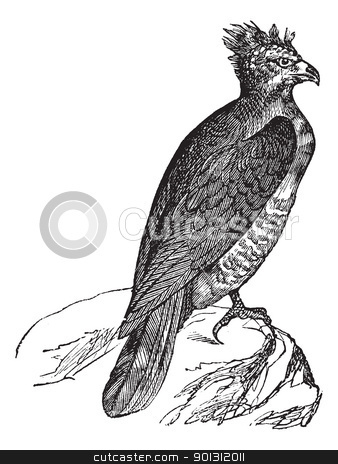 Harpy (thrasaetus harpyia) vintage engraving stock vector clipart, Harpy (thrasaetus harpyia) vintage engraving. Old engraved illustration of harpy eagle. by Patrick Guenette