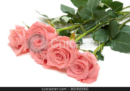 Three roses lies stock photo, Three roses lies insulated on white background by Ruslan Kudrin