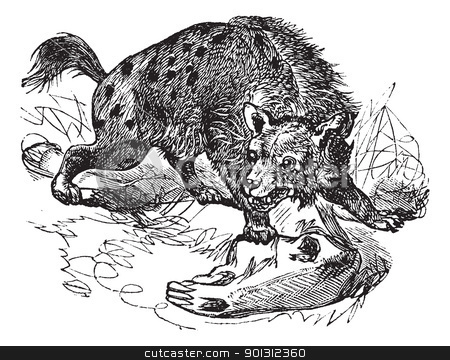 Spotted Hyena or Crocuta crocuta vintage engraving stock vector clipart, Spotted Hyena or Crocuta crocuta or laughing Hyena, vintage engraving. Old engraved illustration of Spotted Hyena, hunting in the meadow.  by Patrick Guenette