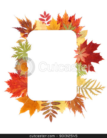 Autumn sheet by frame stock photo, Autumn sheet by frame insulated on white background by Ruslan Kudrin