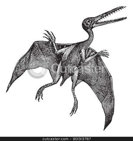 Pterodactylus or Pterodactylus antiquus vintage engraving stock vector clipart, Pterodactylus or Pterodactylus antiquus, vintage engraving. Old engraved illustration of Pterodactylus isolated on a white background.  by Patrick Guenette
