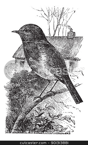 European Robin or Erithacus rubecula vintage engraving stock vector clipart, European Robin or Erithacus rubecula or Robin, vintage engraving. Old engraved illustration of European Robin waiting on a branch. by Patrick Guenette