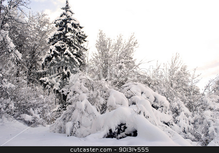 winter landscape stock photo, winter landscape with trees covered in snow by freeteo