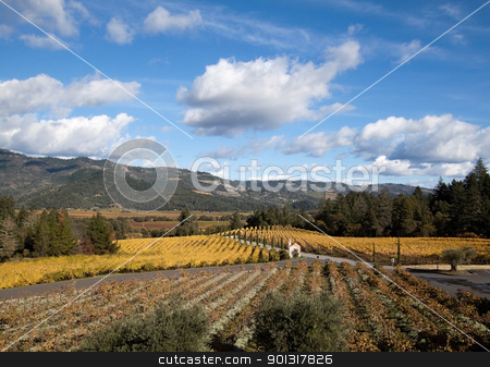 Napa Valley stock photo, The hillsides of Napa Valley wine country by Kevin Tietz