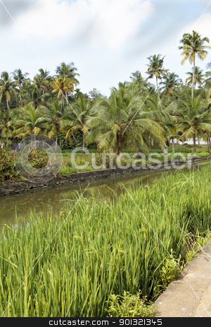 portrait landscape of canal palms paddy fields Ke stock photo, portrait of landscape of canal, palm trees, paddy fields under blue cloudy sky Kerala India, crop space copy space veritical by Kantilal Patel