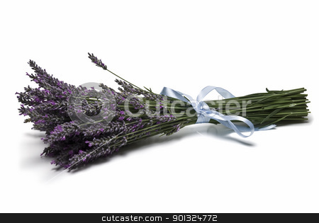Bunch of lavender. stock photo, A bunch of lavender isolated on a white background. by angelsimon
