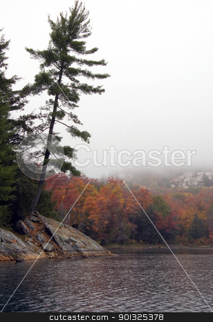 spruce trees stock photo, Lonely spruce trees in the lake shore in Killarney park by Pavel Cheiko