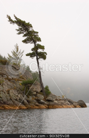 Lake stock photo, Lonely spruce trees in the lake shore in Killarney park