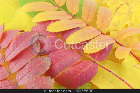 Abstract background stock photo, Abstract background with color autumn leaves by Sergei Devyatkin
