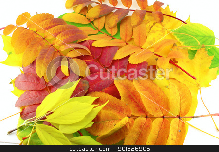 Abstract background with color leaves stock photo, Abstract background with color autumn leaves by Sergei Devyatkin