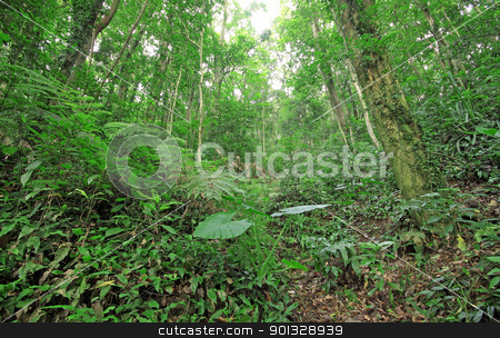 tree forest during spring  stock photo, tree forest during spring  by Keng po Leung