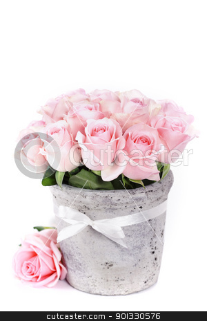 roses in a pot stock photo, bouquet of pink roses in a pot on the white background by klenova