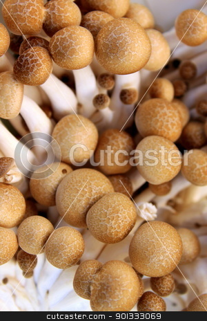 Mushrooms King Trumpet stock photo, A basket full with king trupet mushrooms by Henrik Lehnerer