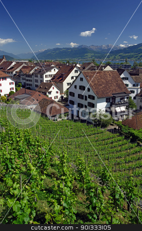 Vineyard in Rapperswil, Switzerland stock photo, Vineyard in Rapperswil, Switzerland with a view of the Alps and the lake Zurich in the distance. by © Ron Sumners