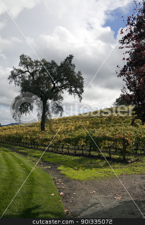 Vineyard stock photo, A bunch of grape vines on the side of a hill by Kevin Tietz