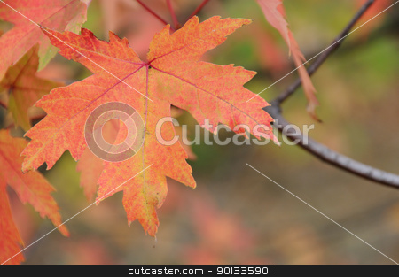 Autumn forest with maple leaf on front. stock photo, Autumn forest with red maple leaf on front. Shallow depth of fields. by Iryna Rasko