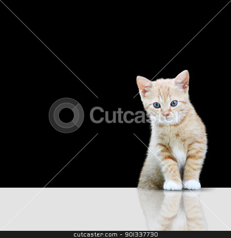 Kitty stock photo, Playful cat lying in wait for prey by Viktor Thaut