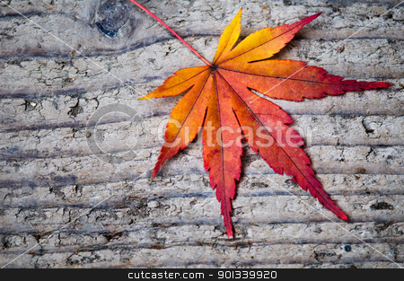 Red leave on tree bark stock photo, Red leave on tree bark autumn impression by Ulrich Schade