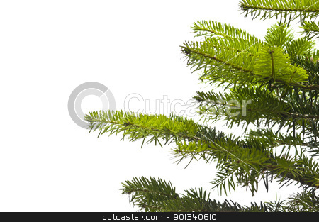 Green branches of a Christmas tree stock photo, Green branches of a Christmas tree isolated closeup by Ulrich Schade