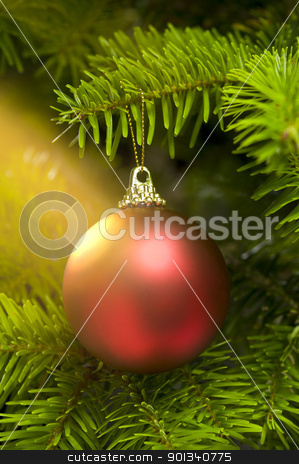 Red ball in a real Caucasian Fir Christmas tree stock photo, Red ball in a real Caucasian Fir Christmas tree nice shining by Ulrich Schade