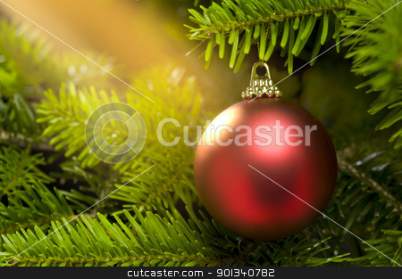 Red ball in a real Christmas tree stock photo, Red ball in a real Caucasian Fir Christmas tree nice shining by Ulrich Schade