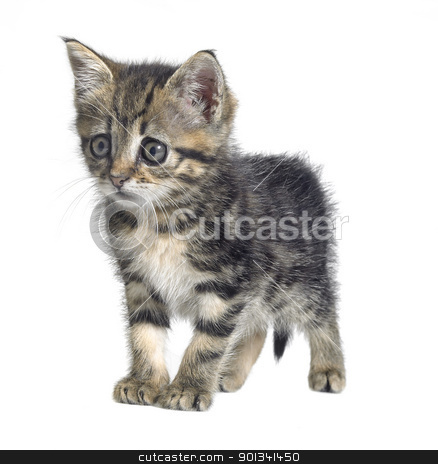 askance kitten stock photo, Studio photography of a needy cute kitten isolated on white by prill