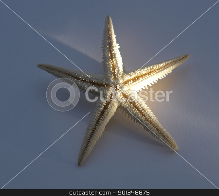 starfish stock photo, decorative starfish in blue back with streak of light by prill