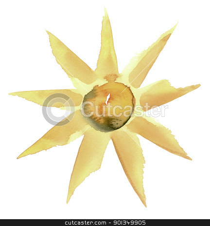 sunny flower illustration stock photo, water color illustration done by me showing a sunny flower in white back by prill