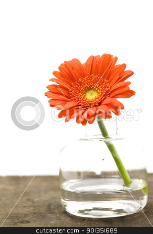 flower stock photo, Flower in vase (SPA concept) by klenova