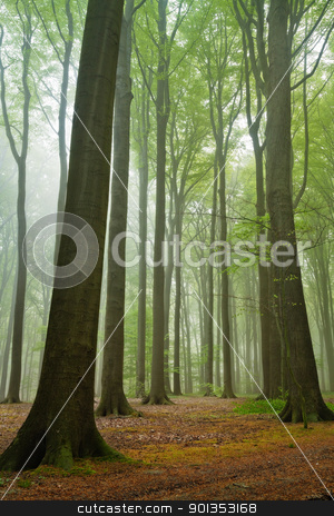 Misty forest stock photo, scenic view on summer forest in a misty moring by Mikhail Lavrenov