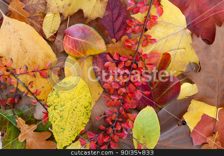 Autumn Leafs stock photo, Autumn Background  Color Leafs on Wooden Background by JAMDesign