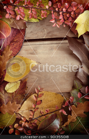 Autumn Border stock photo, Autumn Background - Color Autumn Leafs on Wooden Background by JAMDesign