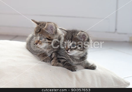 What was that stock photo, I wish we knew how to catch mice by 35millimetre