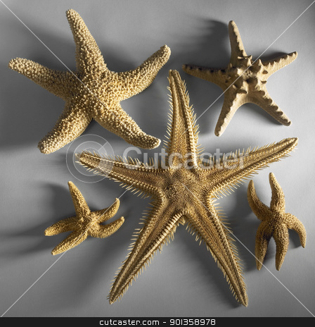 some starfishes stock photo, arrangement with various starfishes in grey back by prill
