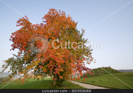 Autumn Tree stock photo, Redding autumn tree in a pale autumn afternoon by 35millimetre
