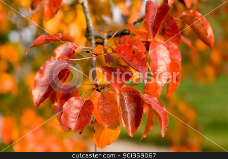 Leaves stock photo, Autumn Leaves in the late afternoon sun by 35millimetre