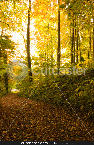 Golden Trees stock photo, Golden Trees in a late afternoon sunset by 35millimetre